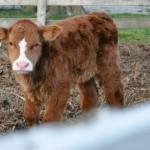 Farmers Care: Meet Pete