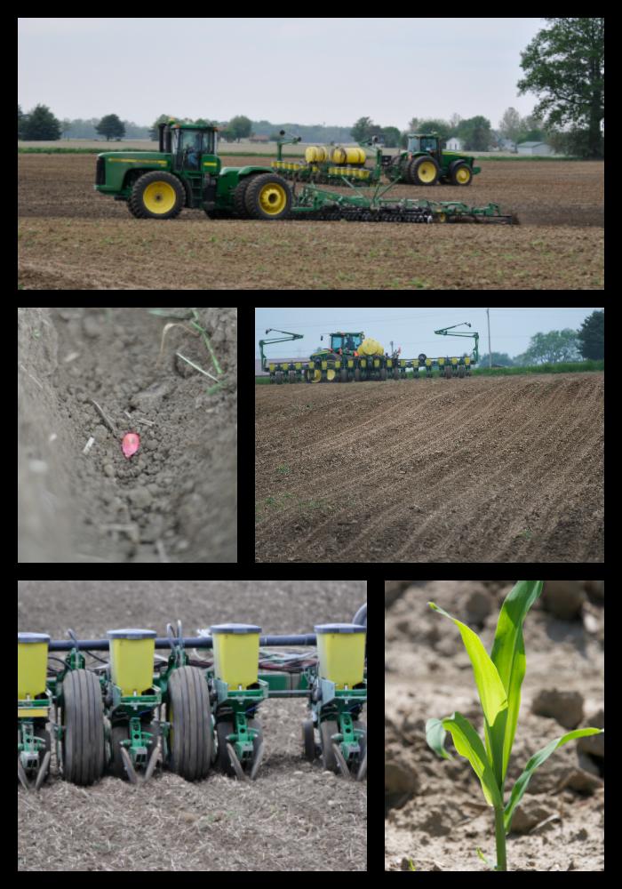 Spring Planting Corn